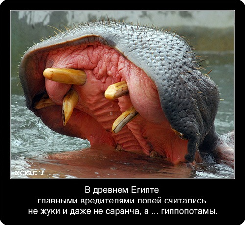 http://cdn.zoopicture.ru/wp-content/uploads/2009/02/26.jpg