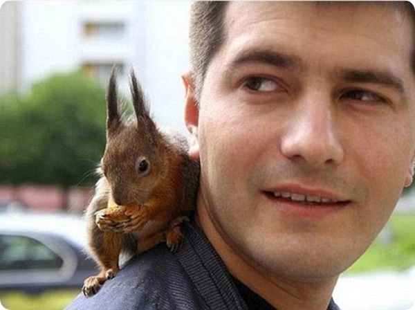 Бельчонок-таксист из Минска