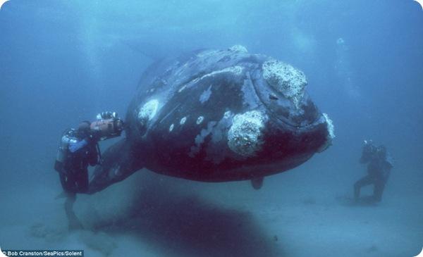 Подводный мир Боба Крэнстона