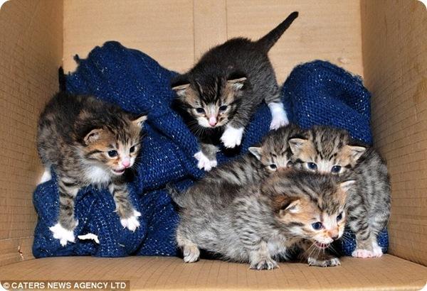 Котята ищут новый дом