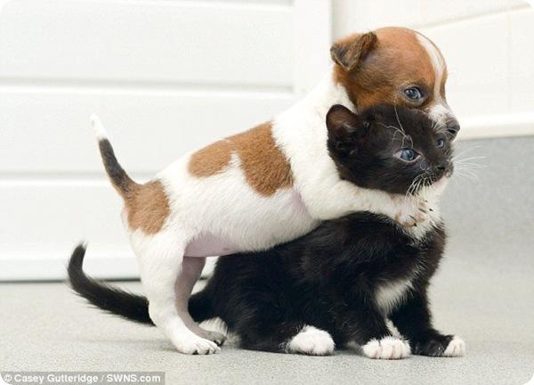 Щенок и котёнок - дружба навеки
