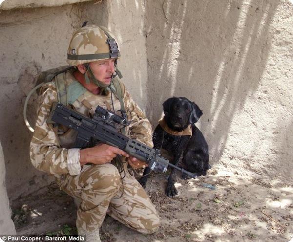 Пёс-герой по кличке Трео