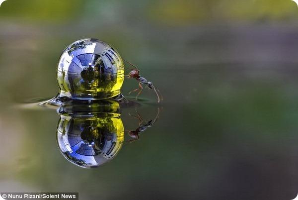 Кристально чистый мир насекомых