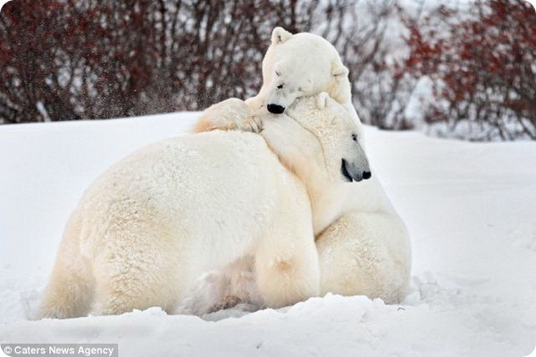 Обними меня, обними меня покрепче!